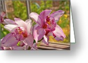 Designers Choice Photo Greeting Cards - Spring Orchids Photograph Greeting Card by Don  Wright