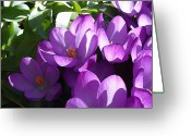 Purples Greeting Cards - Spring Purples Greeting Card by Ross Powell