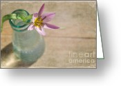 Romantic Floral Greeting Cards - Spring Star Greeting Card by Iris Lehnhardt