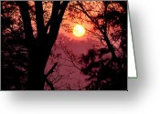 Wv Greeting Cards - Spring Sunrise through Trees Greeting Card by Thomas R Fletcher