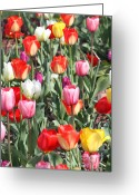 Flowers Glass Art Greeting Cards - Spring Tulips 3 Greeting Card by Robert Pearson