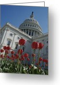 Spring Scenes Greeting Cards - Spring Tulips At The Capitol Greeting Card by Brian Gordon Green
