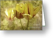 Tulip Art Botanical Art Mixed Media Greeting Cards - Spring Tulips Greeting Card by Elaine Manley