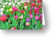 Pink Flower Prints Digital Art Greeting Cards - Spring Tulips Flower Field I Greeting Card by Artecco Fine Art Photography - Photograph by Nadja Drieling