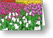 Flowers Pictures Greeting Cards - Spring Tulips Flower Field II Greeting Card by Artecco Fine Art Photography - Photograph by Nadja Drieling