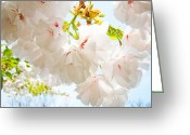 Popular Framed Prints Greeting Cards - Spring White Pink Tree Flower Blossoms Greeting Card by Baslee Troutman Fine Art Prints