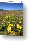 Purple Greeting Cards - Spring Wildflowers 1 Greeting Card by Peter Tellone