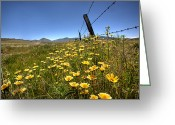 Barbed Wire Greeting Cards - Spring Wildflowers 4 Greeting Card by Peter Tellone
