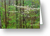 Webster County Greeting Cards - Spring Woodland Dogwood in Bloom Greeting Card by Thomas R Fletcher