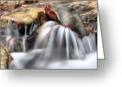 Creeks Greeting Cards - Springing Forward Greeting Card by JC Findley