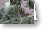 Sage Green Greeting Cards - Springs Glory Greeting Card by Bonnie Bruno
