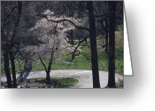 Graves And Tombs Greeting Cards - Springtime Blossoms Highlight Arlington Greeting Card by Raymond Gehman