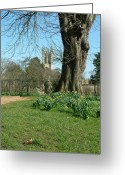 New Britain Greeting Cards - Springtime in Christchurch Meadows. Greeting Card by Mike Lester
