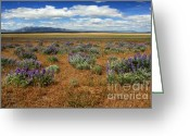 Lassen Greeting Cards - Springtime In Honey Lake Valley Greeting Card by James Eddy
