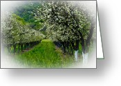 Orchards Greeting Cards - Springtime in the Orchard Greeting Card by Bill Gallagher