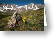 Colorado Mountains Greeting Cards - Springtime in the Rockies Greeting Card by Joe Bonita