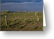 Quiver Greeting Cards - Springtime in the Western Cape Greeting Card by Michele Burgess