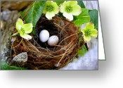 Baby Birds Greeting Cards - Springtime Greeting Card by Karen Wiles