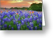 Blue Bonnets Greeting Cards - Springtime Sunset in Texas - Texas Bluebonnet wildflowers landscape flowers paintbrush Greeting Card by Jon Holiday