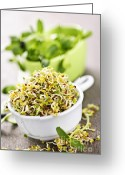 Nutritious Greeting Cards - Sprouts in cups Greeting Card by Elena Elisseeva