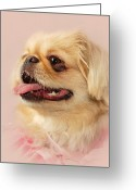 Purebreed Greeting Cards - Spunky Sandy  Greeting Card by Angie McKenzie