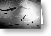 Black And White Animal Greeting Cards - Squales Fish Greeting Card by Xamah Image