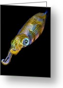Squid Greeting Cards - Squid at night Greeting Card by Rico Besserdich