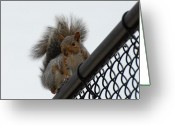 Squirrel Photographs Greeting Cards - Squirrel 117 Greeting Card by Joyce StJames