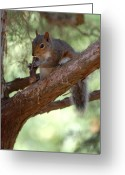 Squirrel Photographs Greeting Cards - Squirrel 2 Greeting Card by Joyce StJames