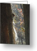 Squirrel Photographs Greeting Cards - Squirrel 3 Greeting Card by Joyce StJames