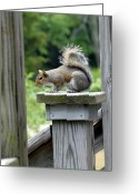 Squirrel Photographs Greeting Cards - Squirrel 56 Greeting Card by Joyce StJames