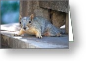 Animals Greeting Cards - Squirrel Friend2 Greeting Card by Kimberly Gonzales