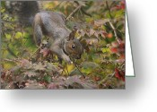 Cute Pyrography Greeting Cards - Squirrel In Fall Greeting Card by Valia Bradshaw