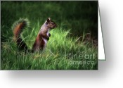 Squirrel Photographs Greeting Cards - Squirrel in Magical Garden Greeting Card by Danuta Bennett