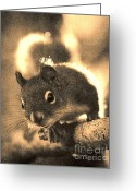 Janeen Wassink Searles Greeting Cards - Squirrel in Sepia Greeting Card by Janeen Wassink Searles