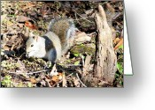 Cypress Knees Greeting Cards - Squirrel in Shadow of Cypress Knee Greeting Card by Carol Groenen