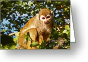 Squirrel Photographs Greeting Cards - Squirrel Monkey Greeting Card by Methune Hively