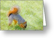 Foraging Greeting Cards - Squirrelly Greeting Card by Jeff Kolker