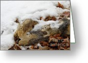 Squirrels In Snow Greeting Cards - Squirrels in Winter Greeting Card by Bill Hyde