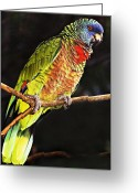 St. Lucia Parrot Greeting Cards - St Lucia Parrot Greeting Card by Chester Williams
