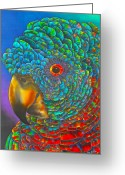 St. Lucia Parrot Greeting Cards - St. Lucian Parrot Greeting Card by Daniel Jean-Baptiste
