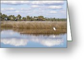 Florida Pyrography Greeting Cards - St. Marks Refuge Greeting Card by Audrey Peaty