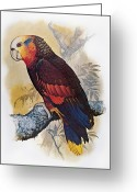 Amazon Parrot Greeting Cards - St Vincent Amazon Parrot Greeting Card by Granger