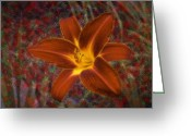 Stafford Greeting Cards - Stafford Daylily Greeting Card by Viktor Savchenko