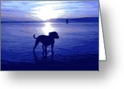 Seaside Greeting Cards - Staffordshire Bull Terrier on Beach Greeting Card by Michael Tompsett