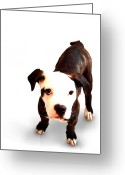 Bull Terrier Greeting Cards - Staffordshire Bull Terrier Puppy Greeting Card by Michael Tompsett