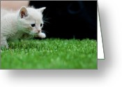 Johannesburg Greeting Cards - Stalking Kitten Greeting Card by Sean Sequeira