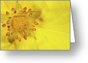 Buttercup Greeting Cards - Stamen Greeting Card by Billy Currie Photography