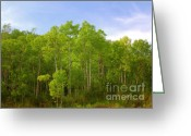 Luscious Greeting Cards - Stand of Quaking Aspen trees Greeting Card by Christine Till