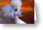 Poodle Greeting Cards - Standard Poodle Portrait Greeting Card by Jai Johnson